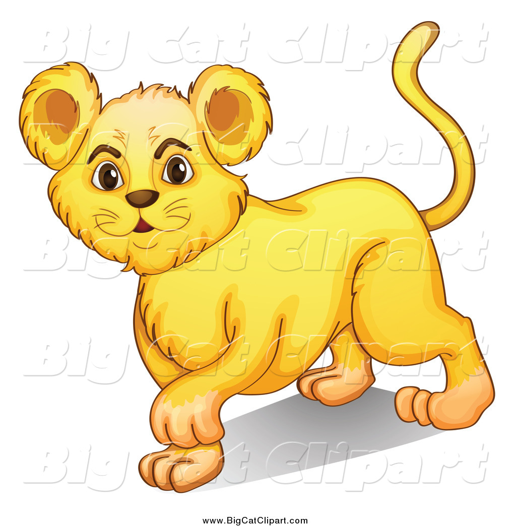 royalty free lion cub stock big cat designs
