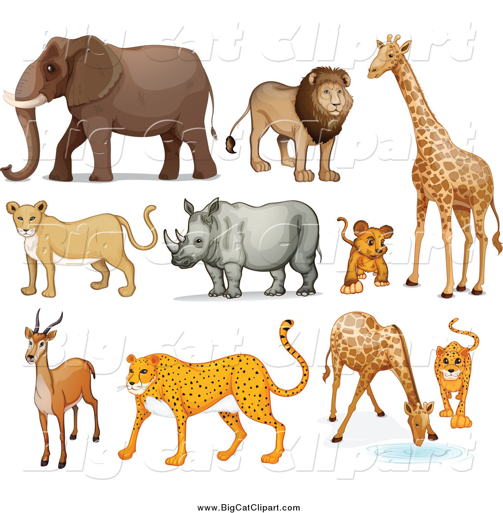 Royalty Free Zoo Animal Stock Big Cat Designs
