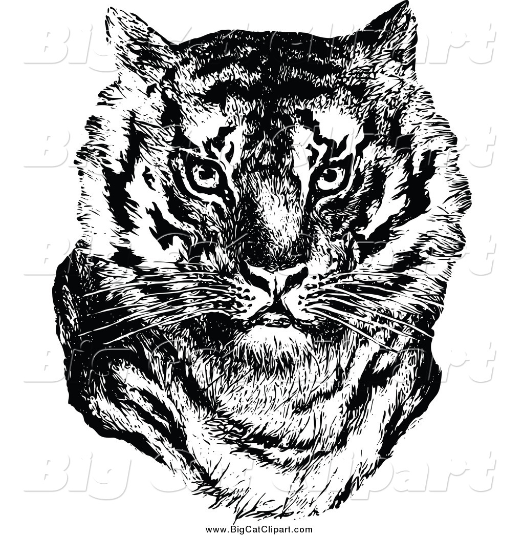 and white tiger face big cat clip art prawny vintage Tiger Face Black And White Clipart
