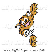 Big Cat Cartoon Vector Clipart of a Cheerful Tiger Character School Mascot Looking Around a Sign by Toons4Biz