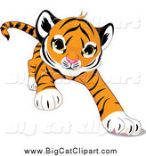 Big Cat Cartoon Vector Clipart of a Cute Tiger Crawling Forward by Pushkin