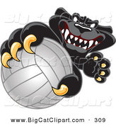 Big Cat Cartoon Vector Clipart of a Happy Black Jaguar Mascot Character Grabbing a Volleyball by Toons4Biz
