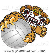 Big Cat Cartoon Vector Clipart of a Mad Cheetah, Jaguar or Leopard Character School Mascot Grabbing a Volleyball by Toons4Biz