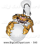 Big Cat Cartoon Vector Clipart of a Mad Tiger Character School Mascot Playing Lacrosse by Toons4Biz