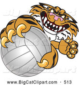 Big Cat Cartoon Vector Clipart of a Mean Tiger Character School Mascot Grabbing a Volleyball by Toons4Biz