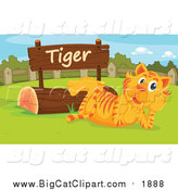 Big Cat Cartoon Vector Clipart of a Zoo Tiger Resting by a Sign by Graphics RF