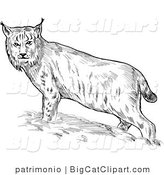 Big Cat Clipart of a Sketched Eurasian Bobcat by Patrimonio