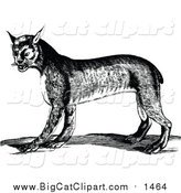 Big Cat Vector Clipart of a Black and White Bobcat by Prawny Vintage