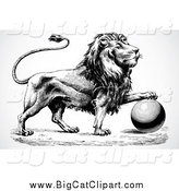 Big Cat Vector Clipart of a Black and White Lion Resting a Paw on a Ball by BestVector