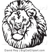 Big Cat Vector Clipart of a Black and White Male Lion Head with a Big Mane by David Rey