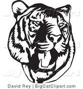 Big Cat Vector Clipart of a Black and White Roaring Tiger Head on White by David Rey