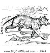 Big Cat Vector Clipart of a Black and White Walking Cougar by Prawny Vintage