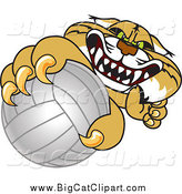 Big Cat Vector Clipart of a Bobcat Grabbing a Volleyball by Toons4Biz