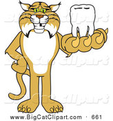 Big Cat Vector Clipart of a Bobcat Holding a Tooth by Toons4Biz