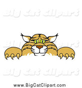 Big Cat Vector Clipart of a Bobcat Peeking over a Sign by Toons4Biz