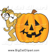 Big Cat Vector Clipart of a Bobcat with a Pumpkin by Toons4Biz
