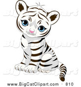 Big Cat Vector Clipart of a Cute Baby Tiger Cub Sitting and Looking Outwards by Pushkin