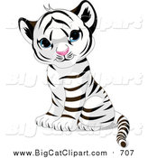 Big Cat Vector Clipart of a Cute Sitting Baby White Tiger Cub with Blue Eyes by Pushkin