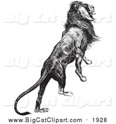 Big Cat Vector Clipart of a Majestic Lion Black and White by Picsburg