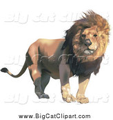 Big Cat Vector Clipart of a Male Lion with a Breeze Blowing His Mane by Dero