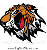 Big Cat Vector Clipart of a Roaring Tiger Head Baring Teeth by Chromaco