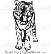 Big Cat Vector Clipart of a Standing Black and White Tiger with Its Mouth Open and Yawning by David Rey