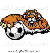 Big Cat Vector Clipart of a Tiger Resting on a Soccer Ball by Chromaco
