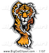 Big Cat Vector Clipart of a Walking Tiger by Chromaco