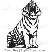 Big Cat Vector Clipart of a Yawning Black and White Tiger Roaring by David Rey