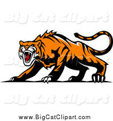 Big Cat Vector Clipart of an Aggressive Tiger by Vector Tradition SM
