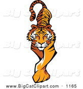 Vector Clipart of a Prowling Tiger by Chromaco