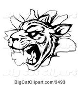 Vector Clipart of a Vicious Tiger Mascot Breaking Through a Wall - Black and White Version by AtStockIllustration
