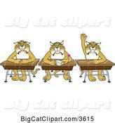Vector Clipart of Cartoon Bobcat School Mascots Sitting at Desks, One Raising His Hand, Symbolizing Respect by Toons4Biz