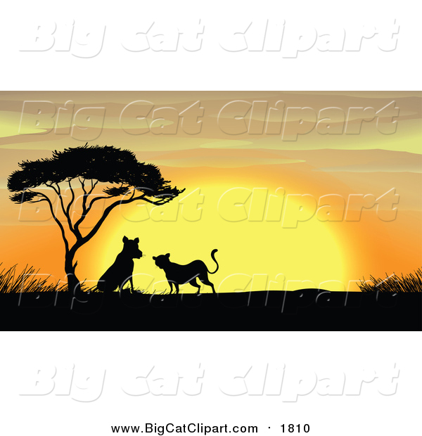 Big Cat Cartoon Vector Clipart of a Silhouetted Leopards by an Acacia Tree at Sunset
