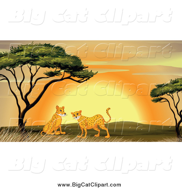 Big Cat Cartoon Vector Clipart of Cheetahs near an Acacia Tree at Sunset