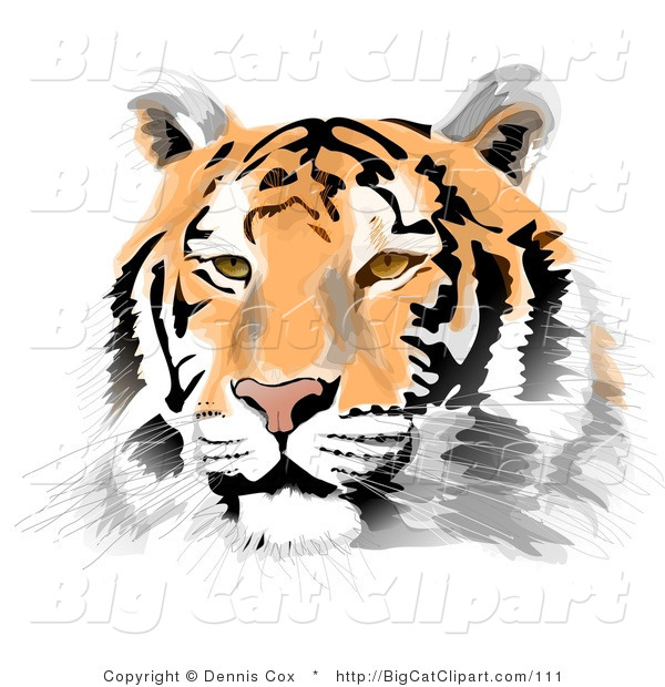 Big Cat Clipart of a Handsome Tiger Face