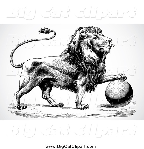 Big Cat Vector Clipart of a Black and White Lion Resting a Paw on a Ball