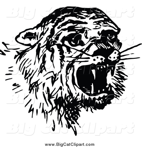 Big Cat Vector Clipart of a Black and White Scared Tiger