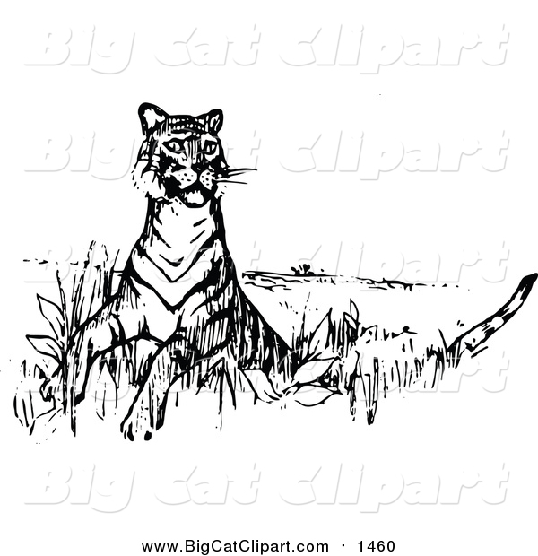 Big Cat Vector Clipart of a Tiger Looking Around - Retro Black Style