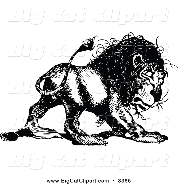 Big Cat Vector Clipart of a Vintage Black and White Lion