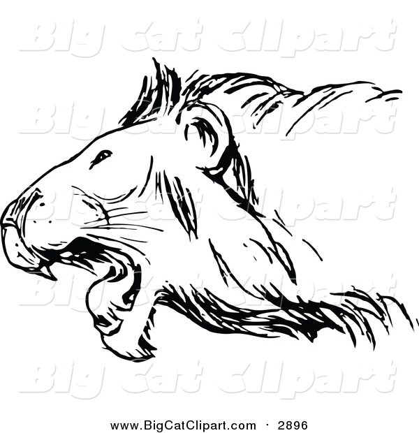 Vector Clipart of a Black and White Roaring Lion