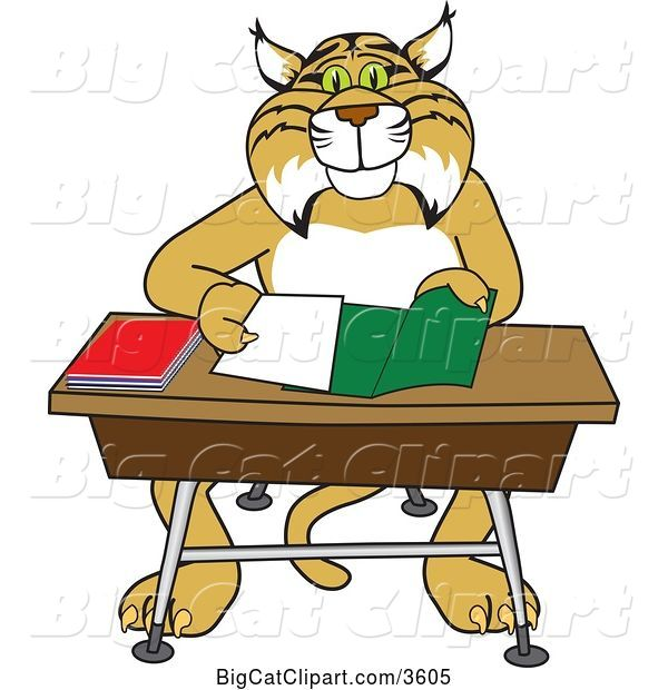 Vector Clipart of a Bobcat School Mascot Organizing and Doing Homework