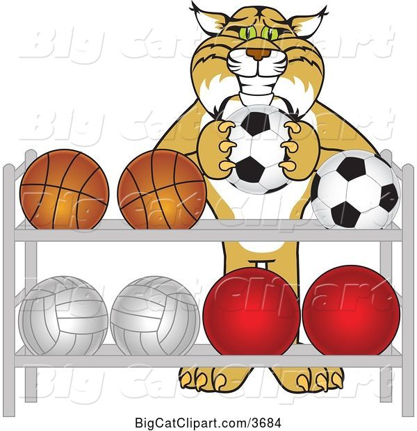 Vector Clipart of a Cartoon Bobcat School Mascot Putting a Soccer Ball Back on a Rack, Symbolizing Respect