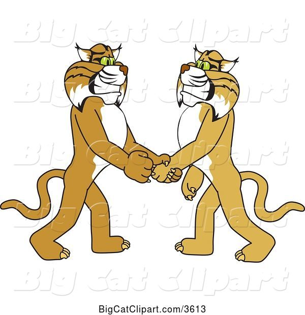 Vector Clipart of a Cartoon Bobcat School Mascot Shaking Hands with a Friend, Symbolizing Gratitude