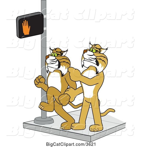 Vector Clipart of a Cartoon Bobcat School Mascot Stopping Another from Using a Crosswalk at the Wrong Time, Symbolizing Safety