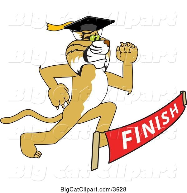 Vector Clipart of a Cartoon Determined Bobcat School Mascot Graduate Running to a Finish Line
