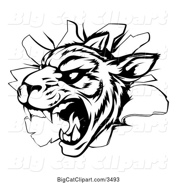 Vector Clipart of a Vicious Tiger Mascot Breaking Through a Wall - Black and White Version
