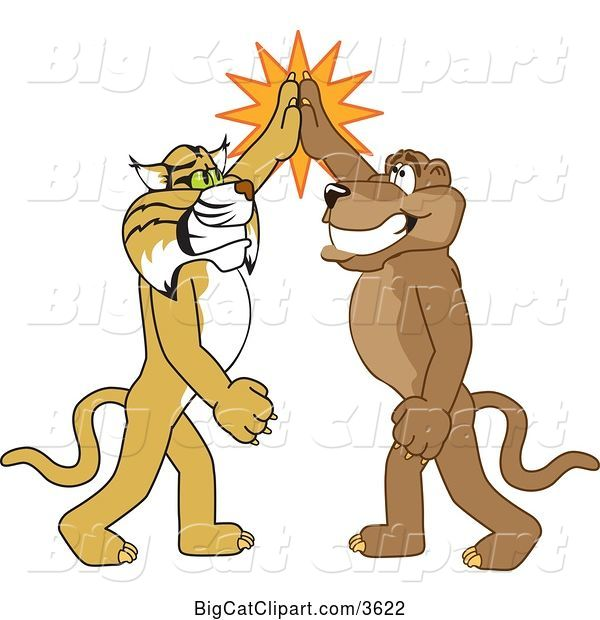 Vector Clipart of Cartoon Bobcat and Cougar School Mascots High Fiving, Symbolizing Teamwork and Sportsmanship