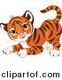 Big Cat Cartoon Vector Clipart of a Frisky Cute Tiger Cub in a Playful Stance by Pushkin