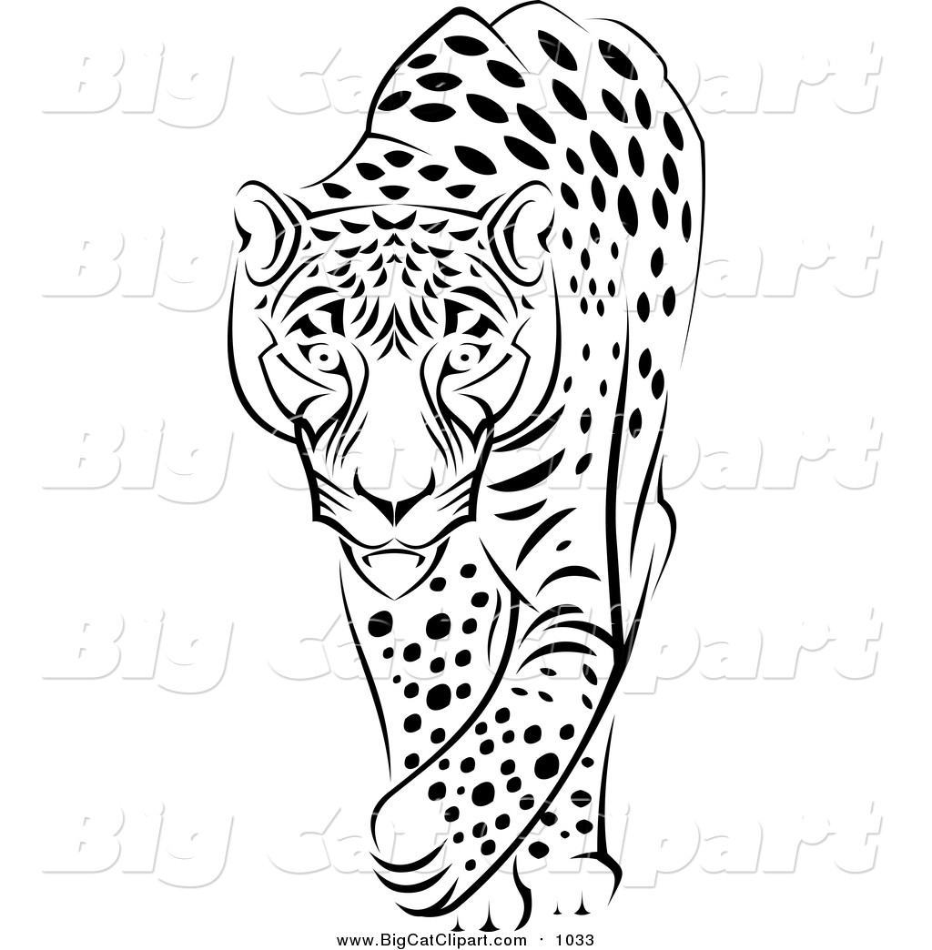 big cat vector clipart of a black and white walking jaguar by vector tradition sm